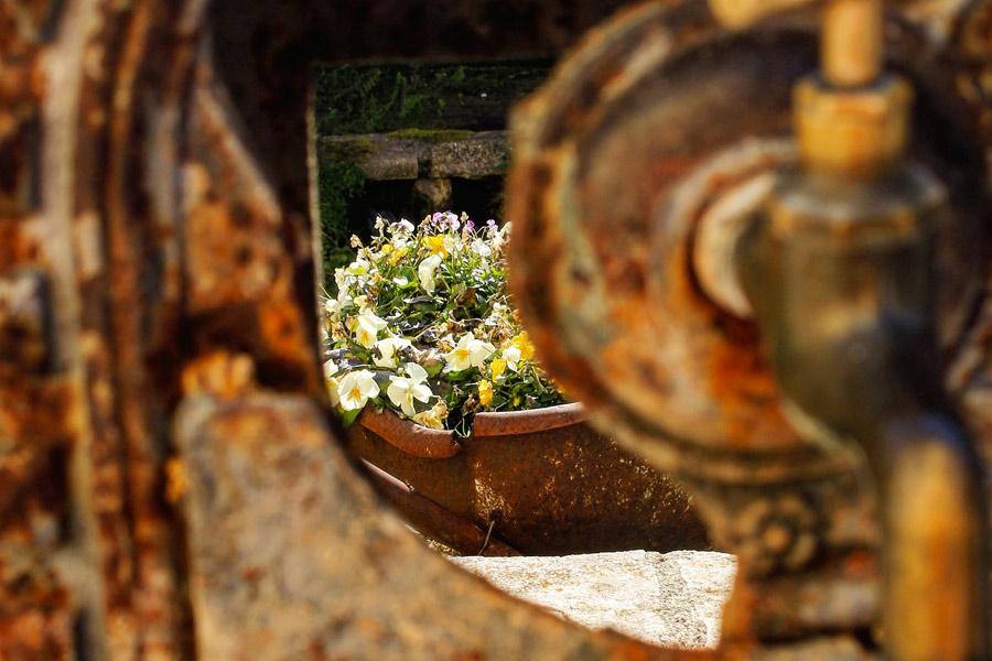 fiori - Adriana Noci